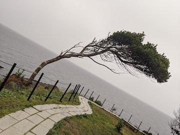 1本の細い木